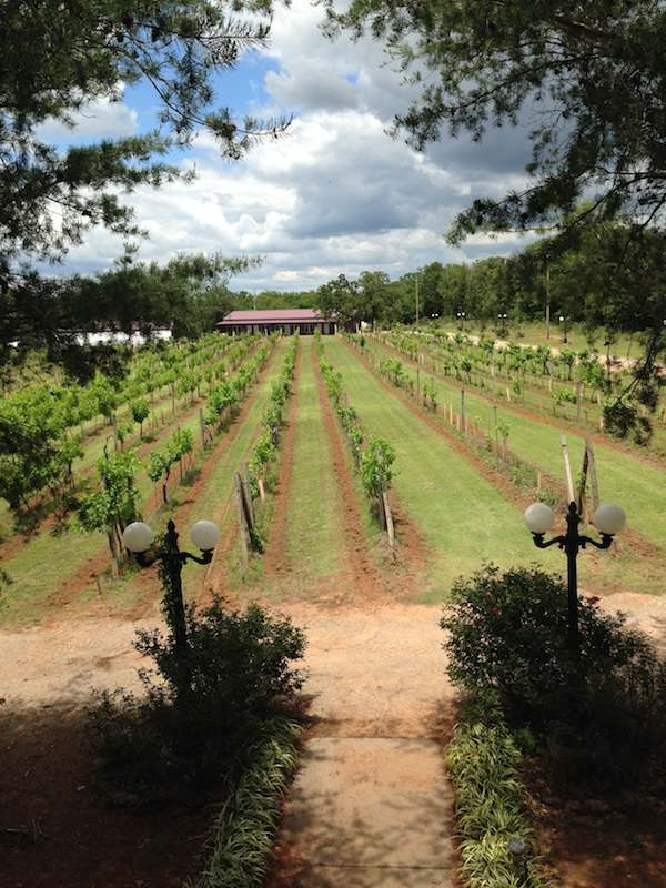 The vineyard at Tres Suenos, as seen from the second floor of Tres Suenos' event venue. Courtesy Tres Suenos