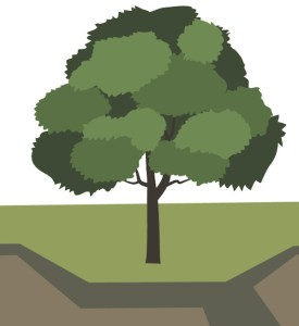 An artistic rendering of what the tree in front of Chapman used to look like: majestic, tall and still alive. Elias Brinkman/Collegian